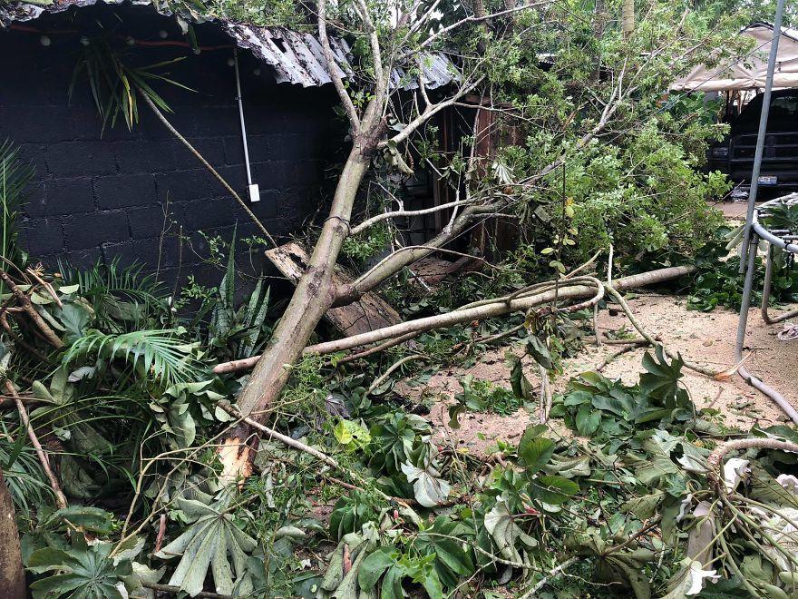 árbol tirado por el viento
