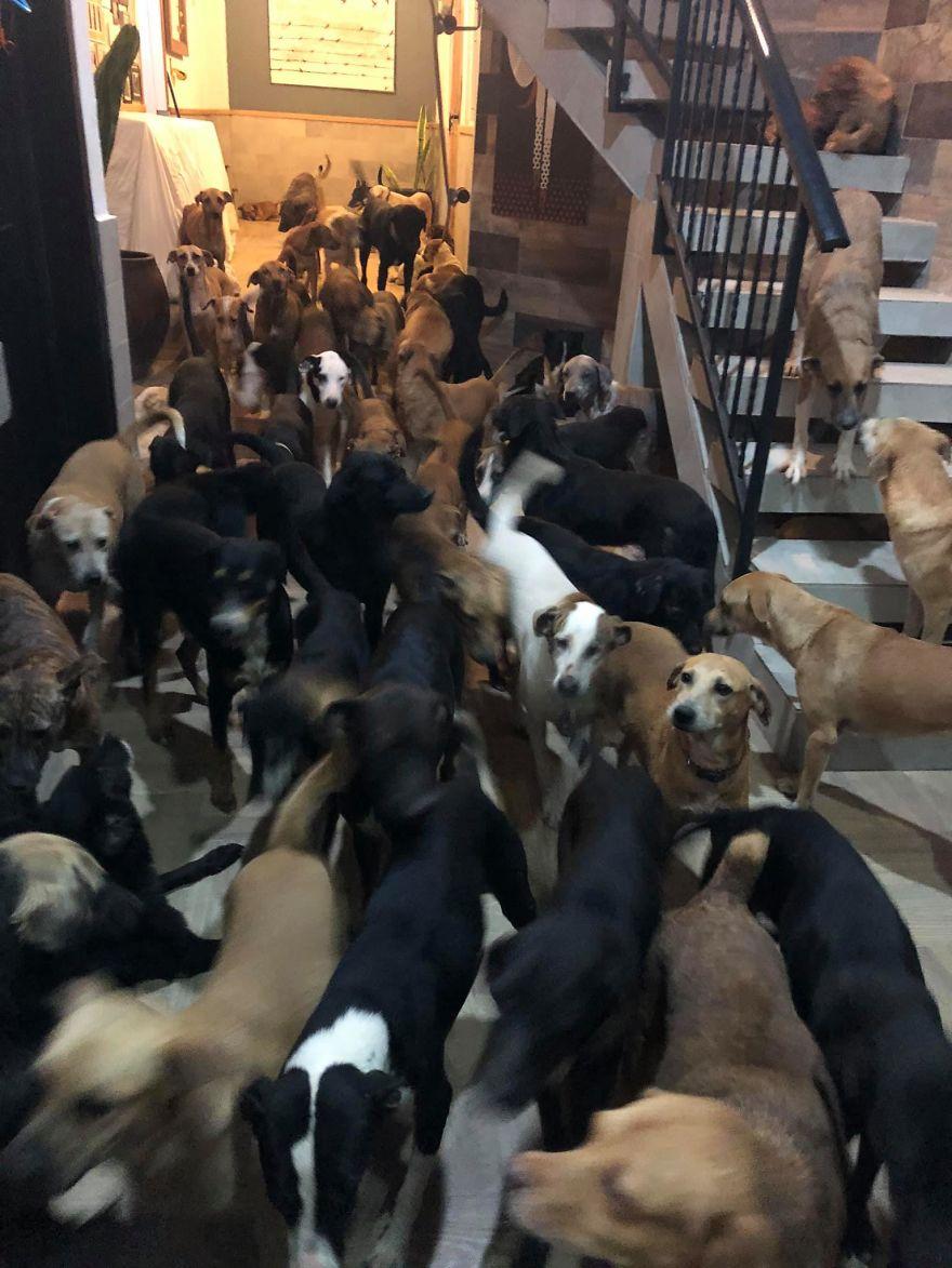 perros por toda la casa