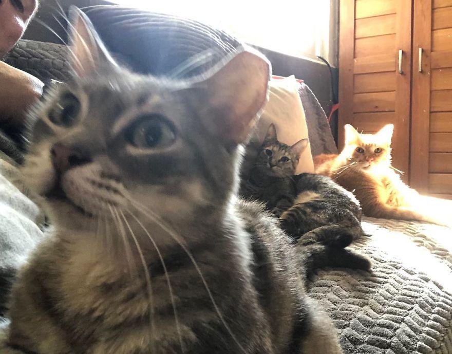 trío de gatos