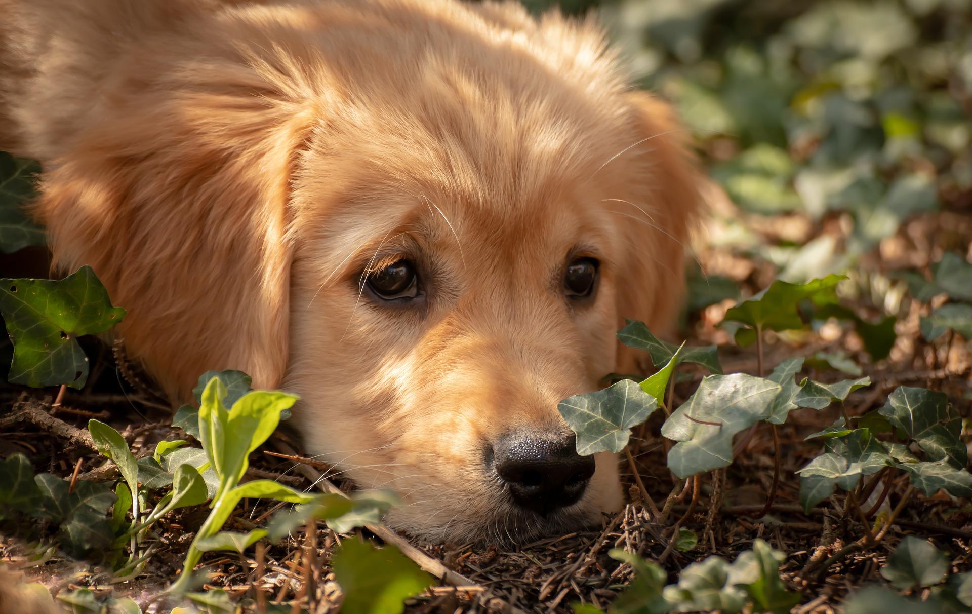 perro olfateando