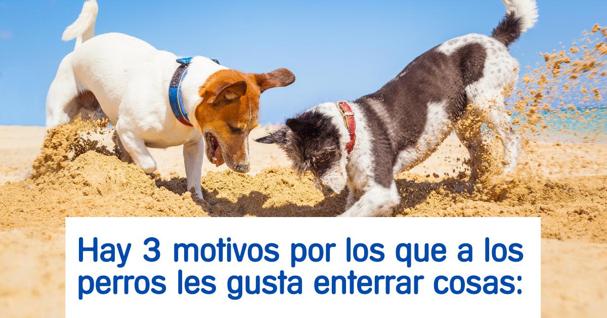 perros-enterrar