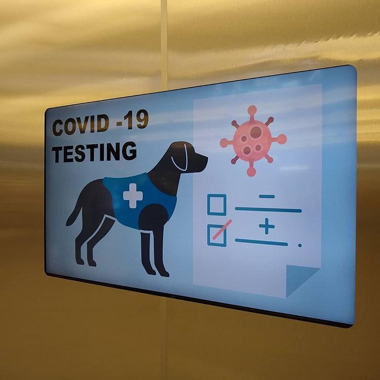 detector canino de covid-19