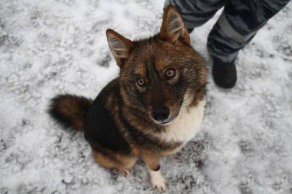 perro Sulimov