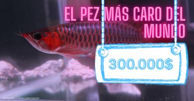 pez-caro