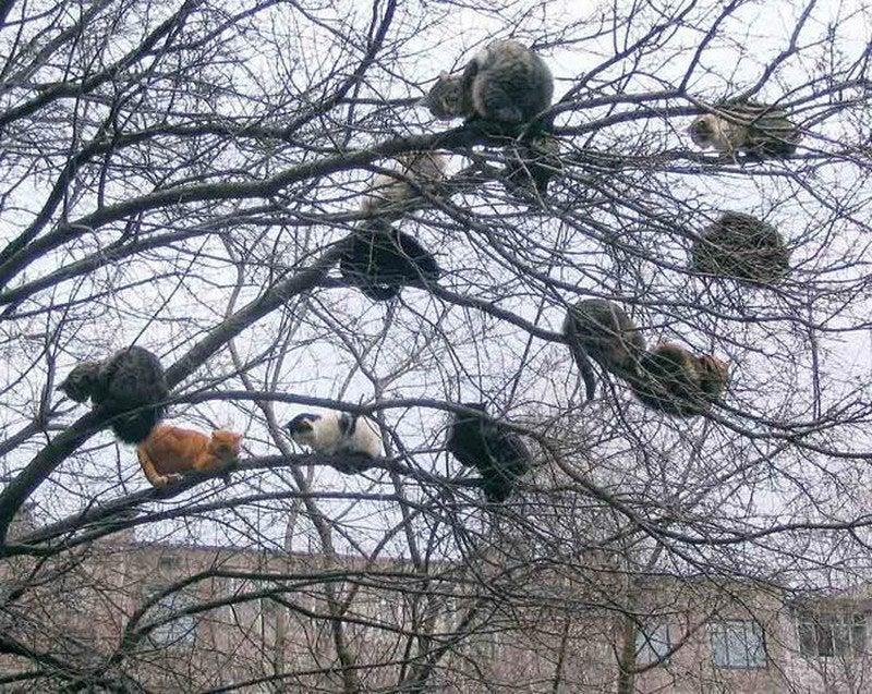 12 gatos en arbol