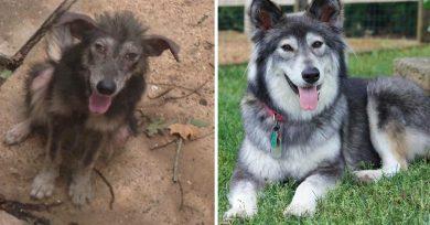 antes-despues-animales-adoptados