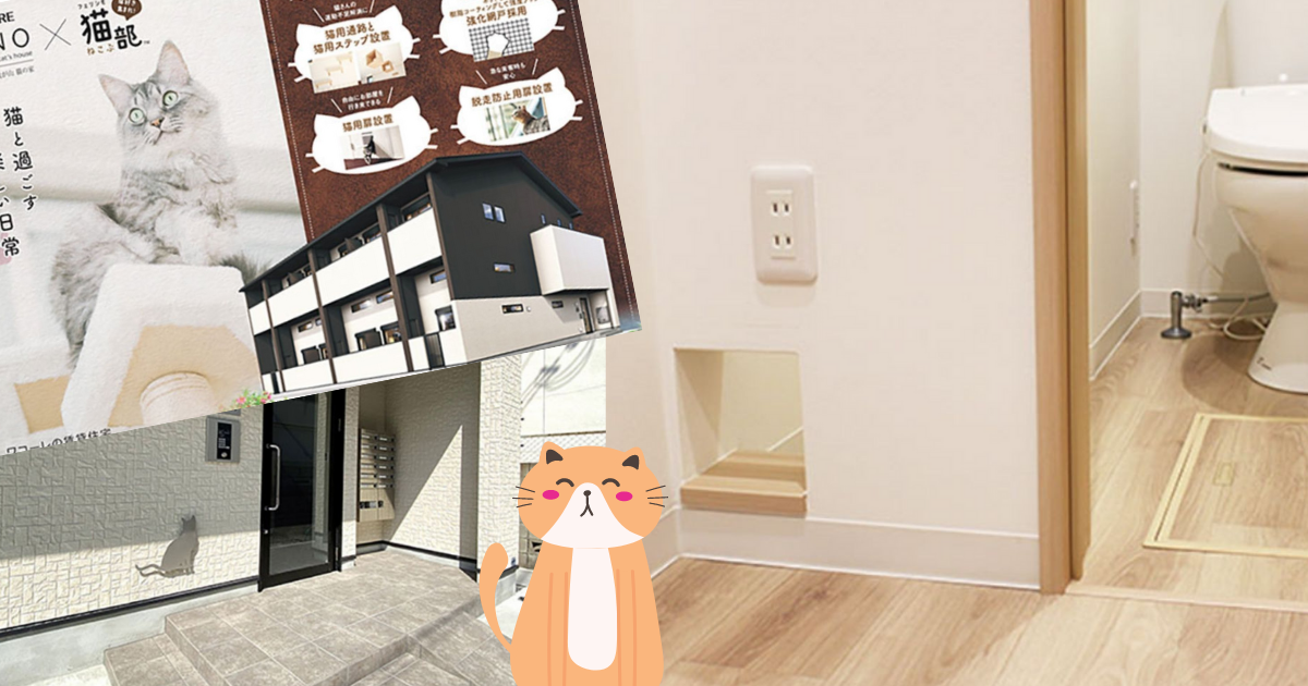 apartamentos-solteros-gatos