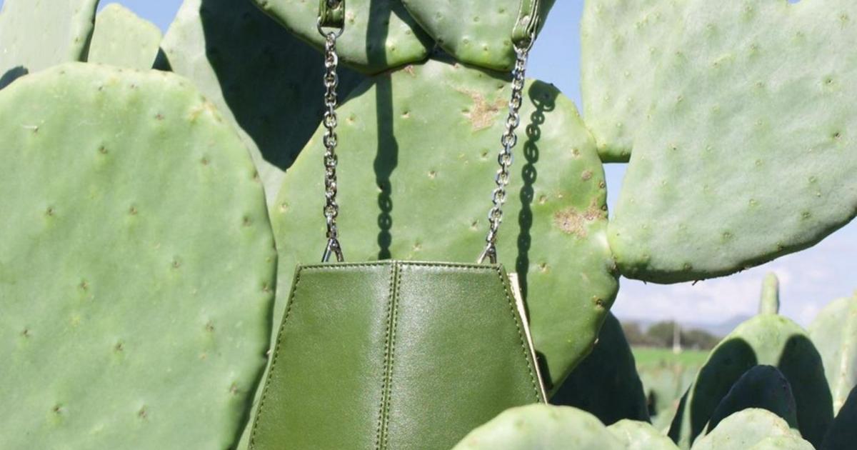 cuero-cactus