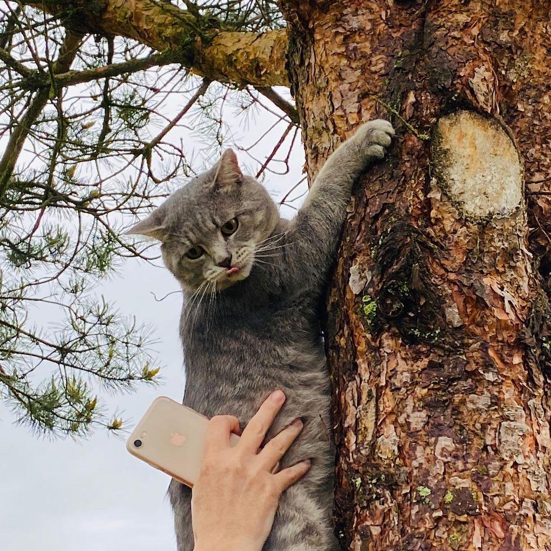 gato agarrado en arbol