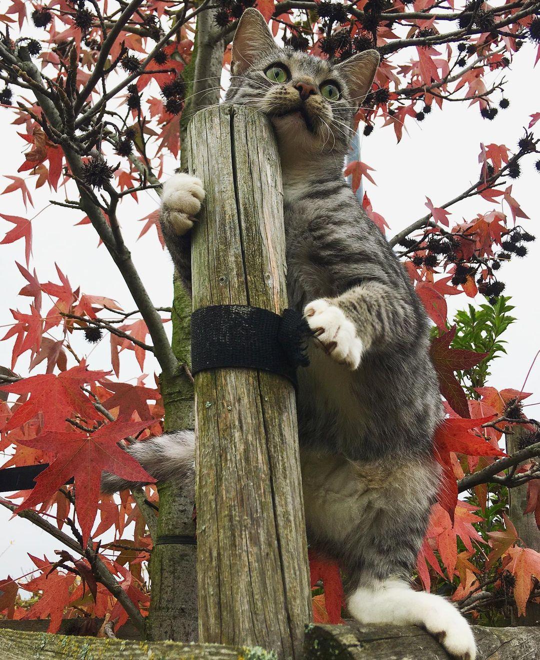 gato agarrado