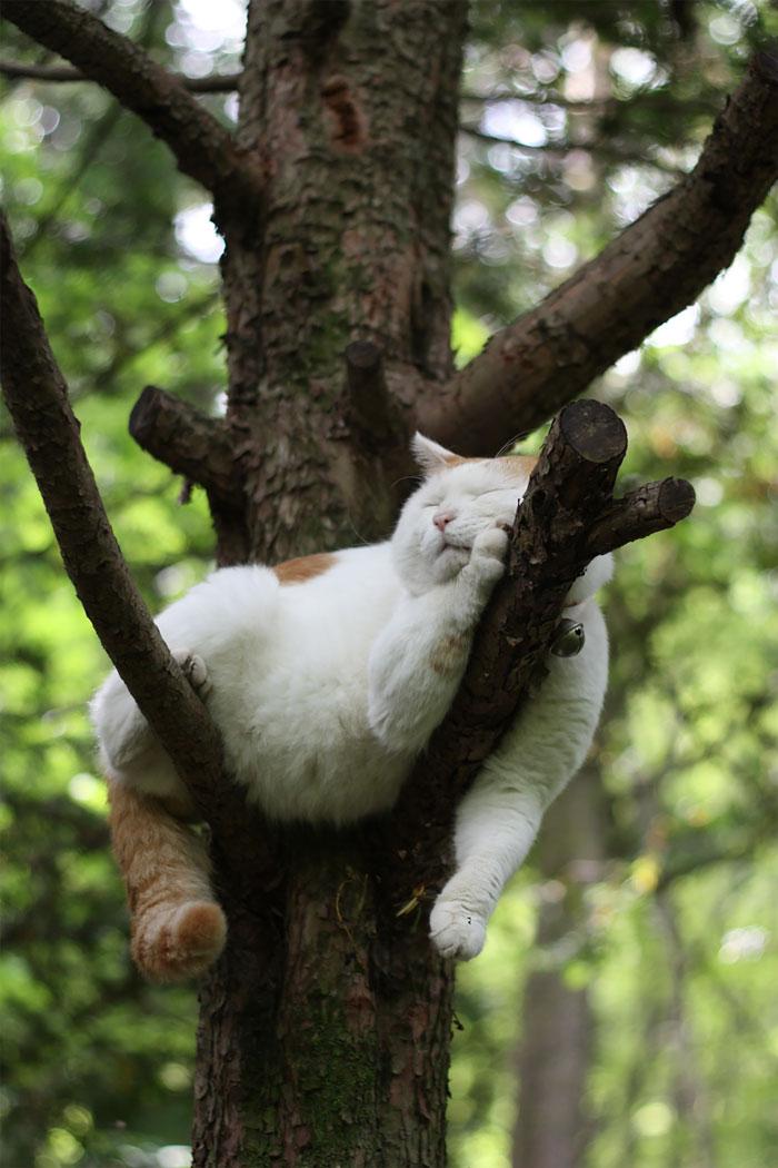 gato durmiendo en arbol