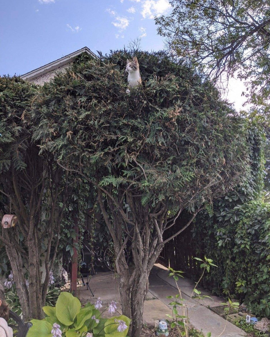 gato en árbol 1