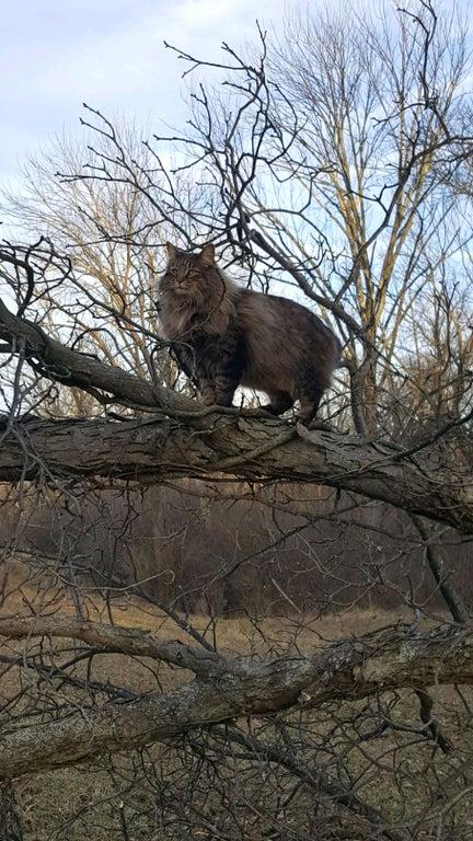 gato en arbol 2
