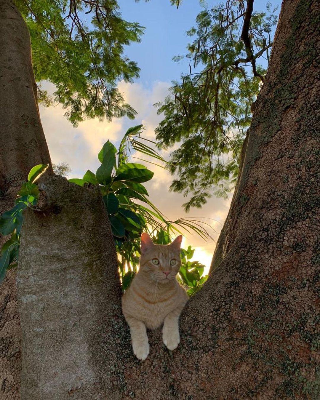 gato en arbol 3