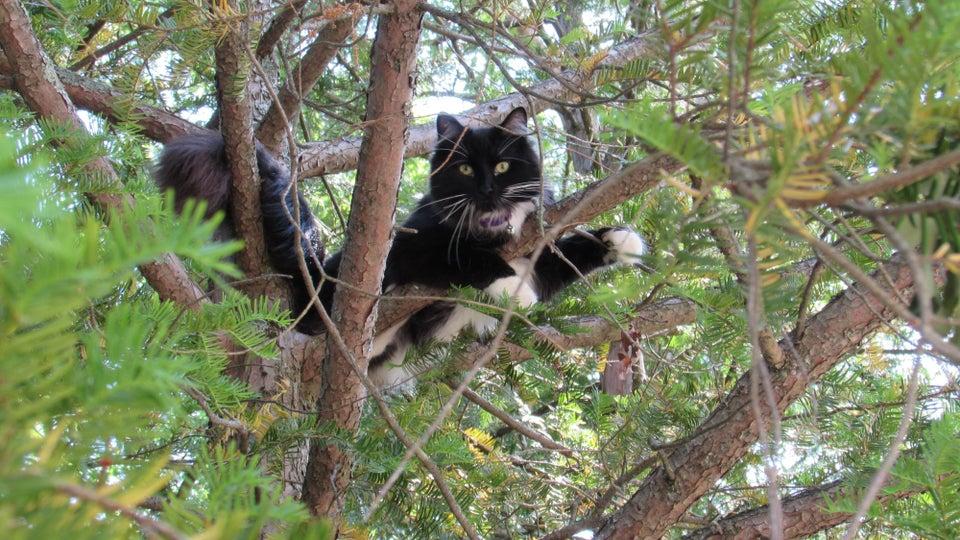 gato en arbol 4