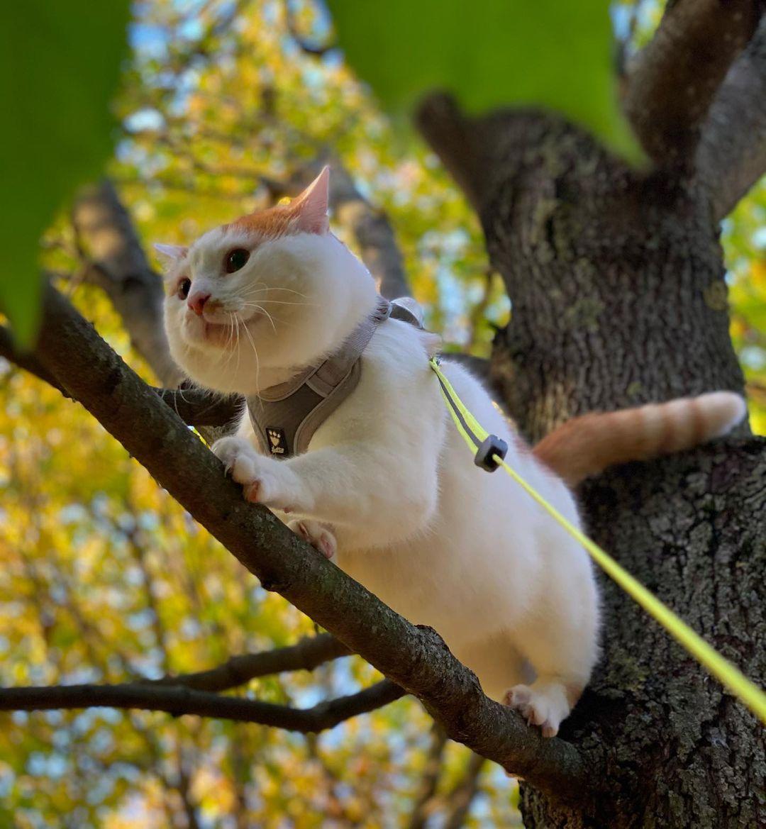 gato en arbol 5