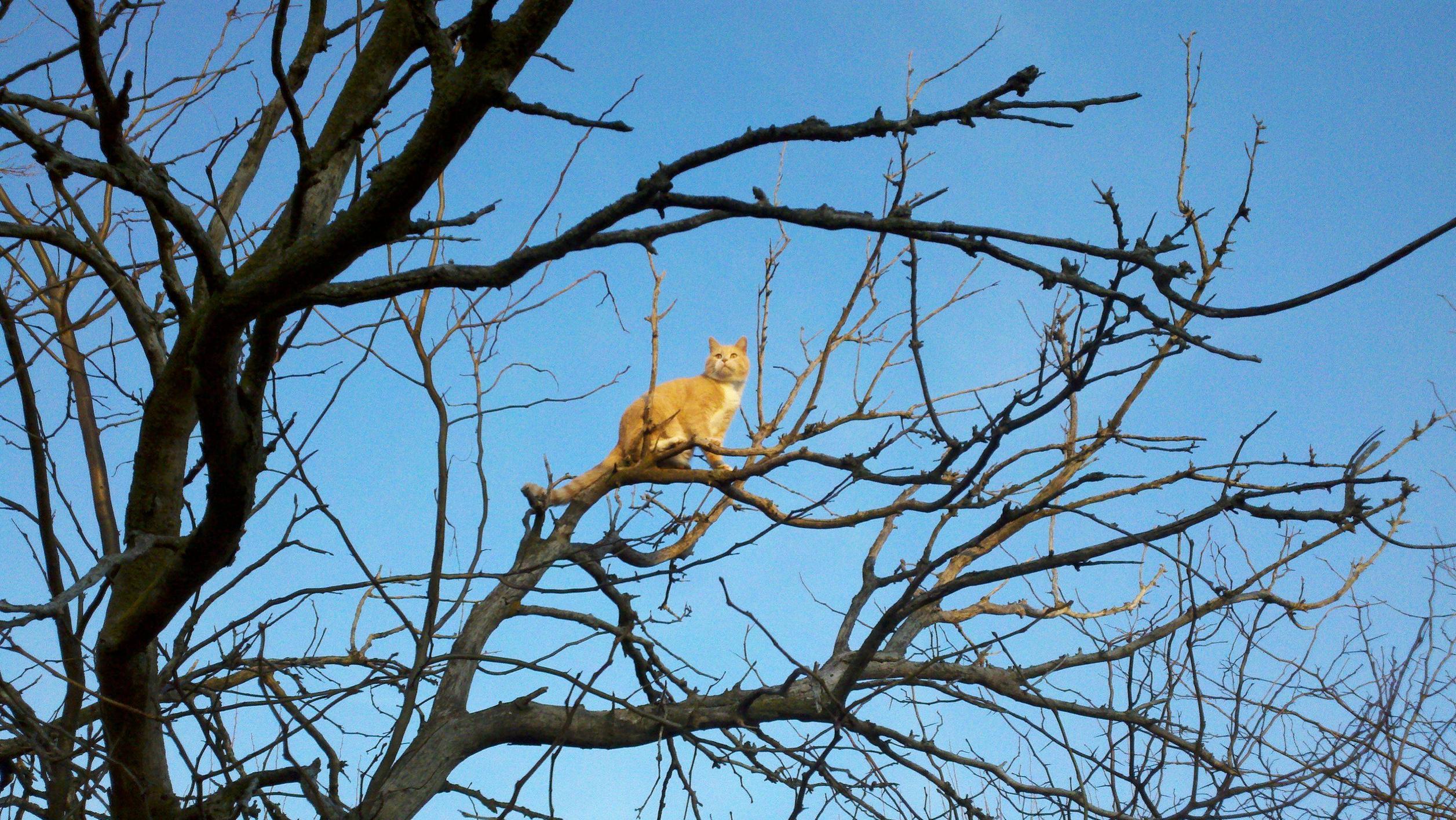 gato en arbol 6