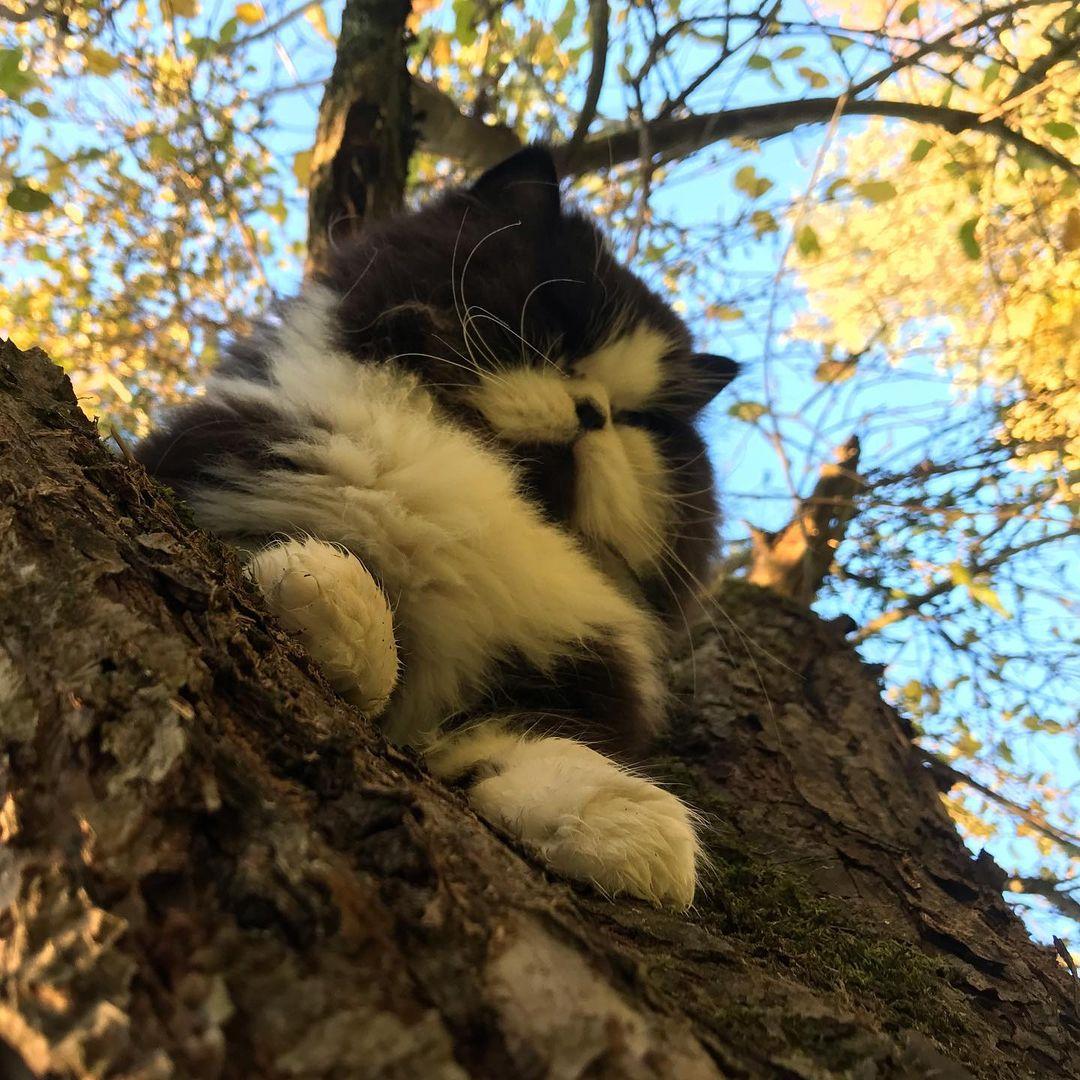 gato en arbol 7