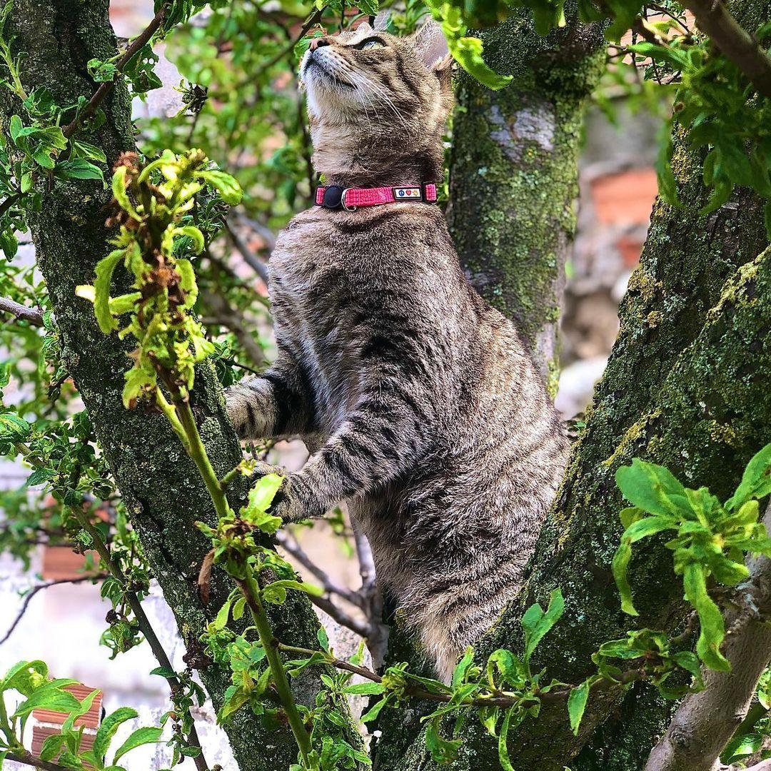 gato en arbol 8