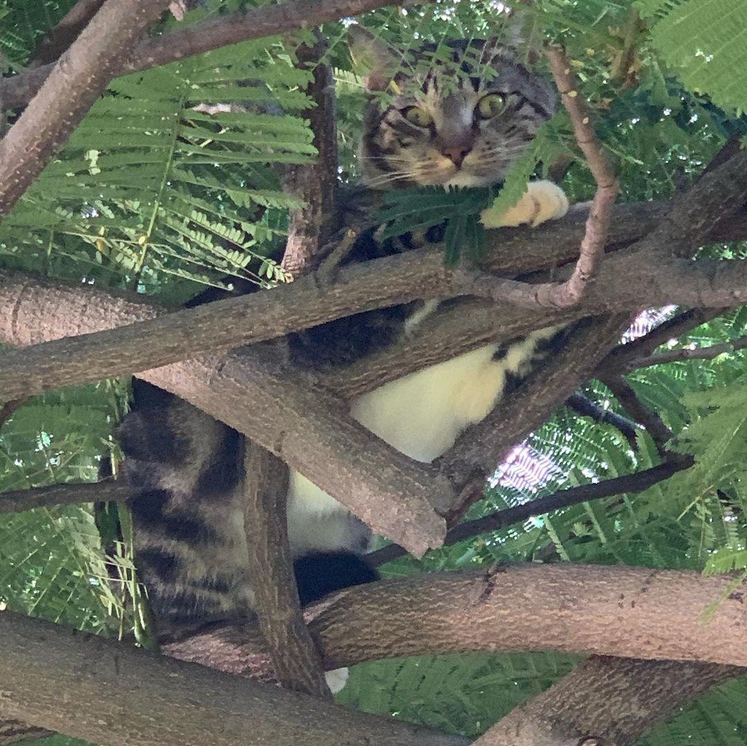 gato en arbol camuflado