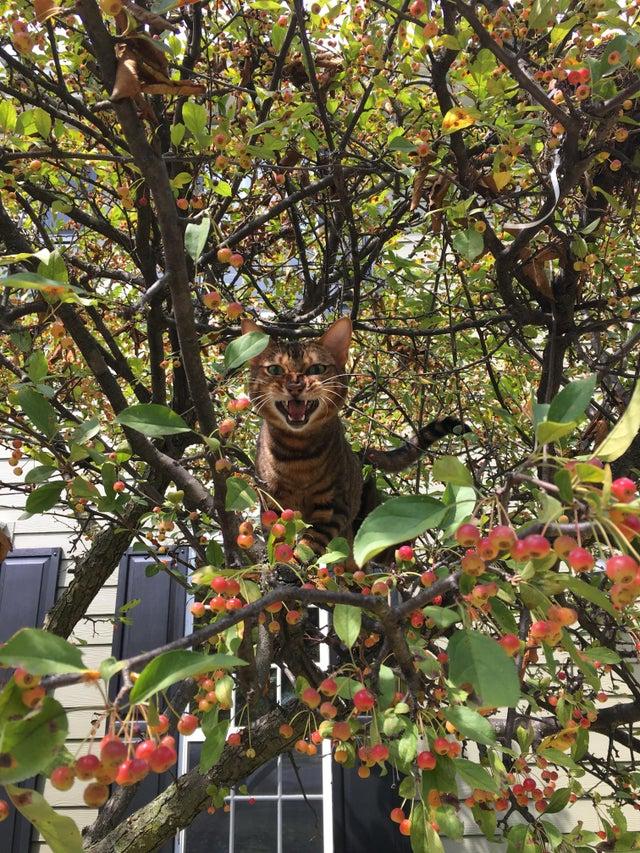 gato en arbol enfadado