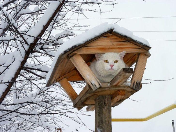 gato en casa arbol