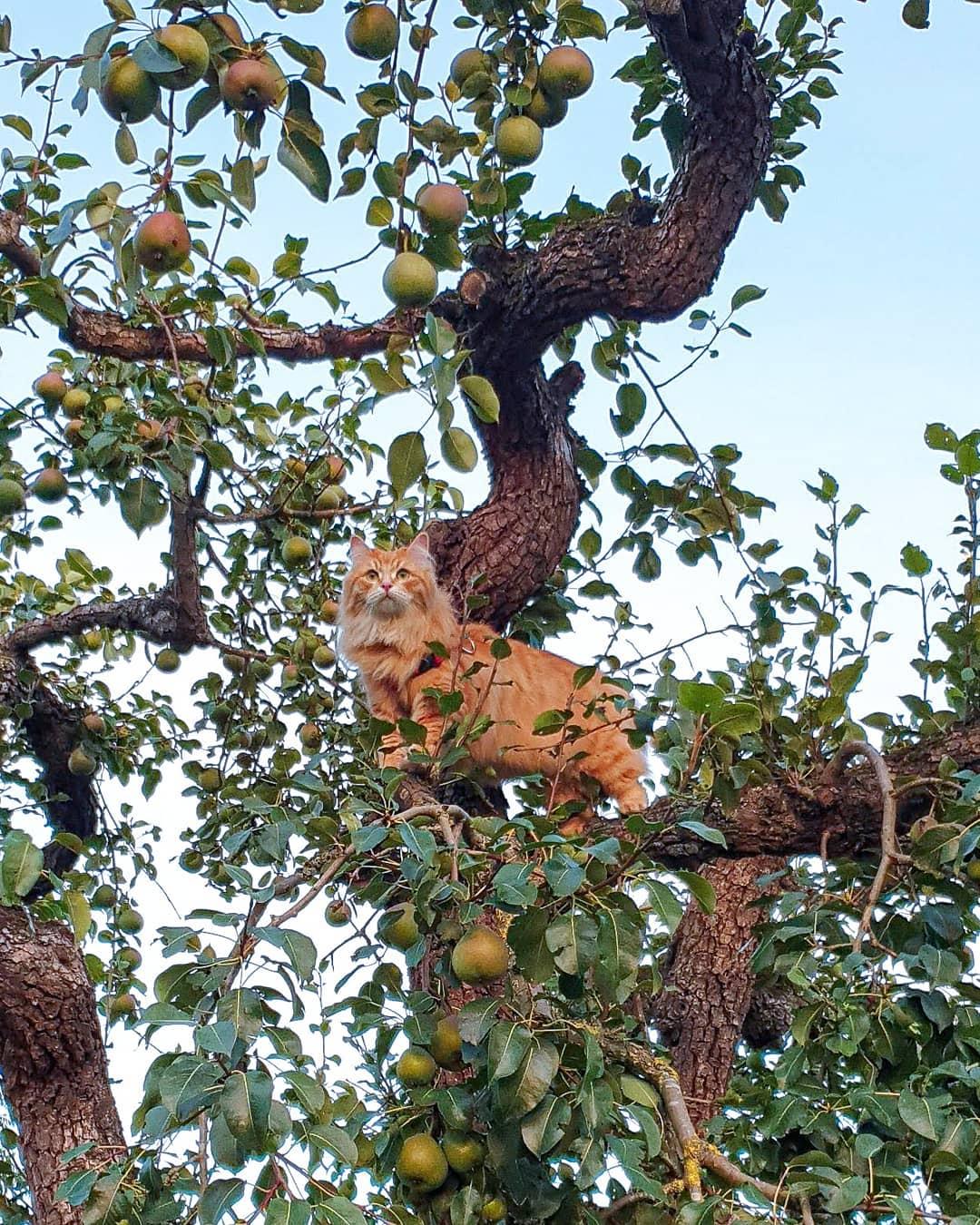 gato en manzano