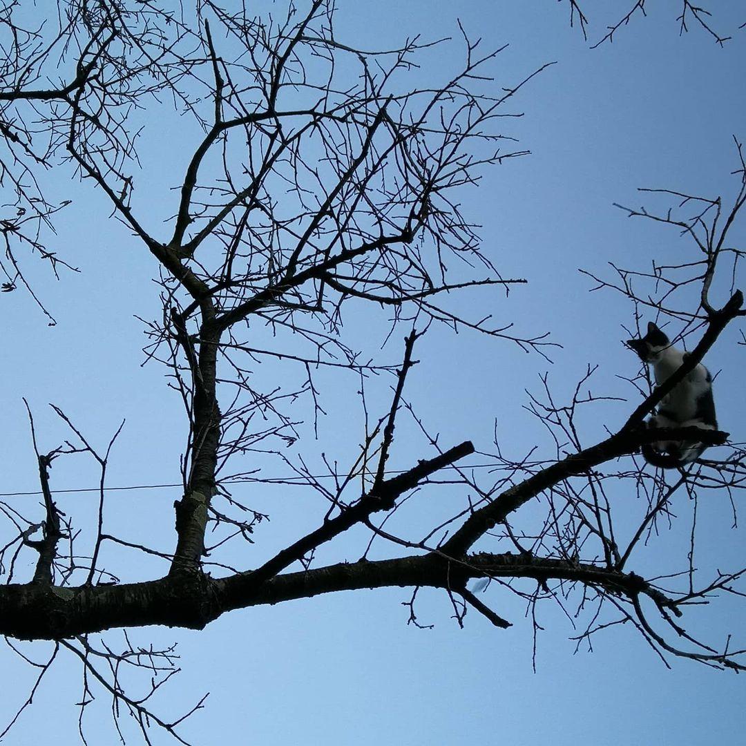 gato en ramas
