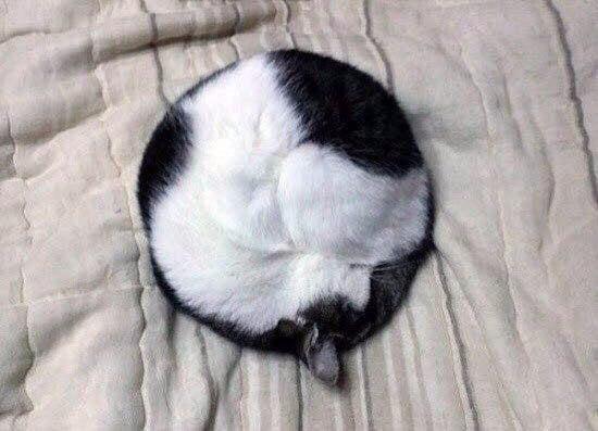 gato hecho bola