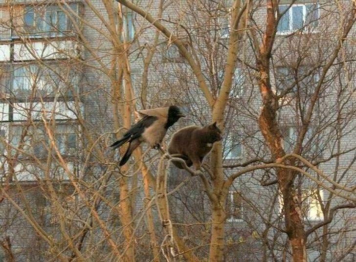 gato y pajaro en arbol