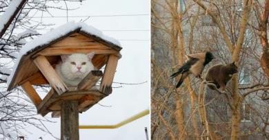 gatos-pajaros