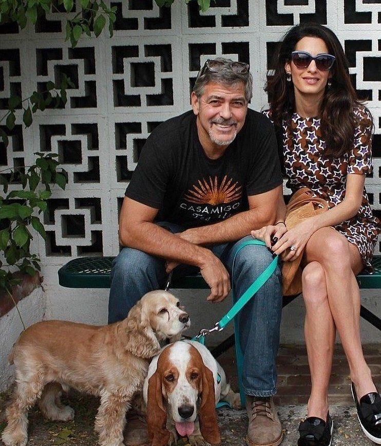 george clooney mujer y perros