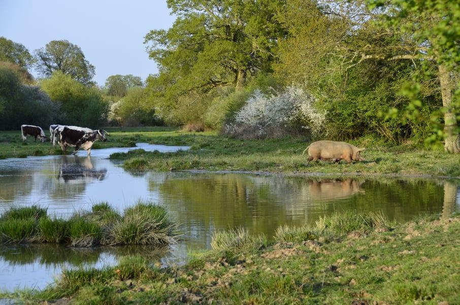 estanque con animales