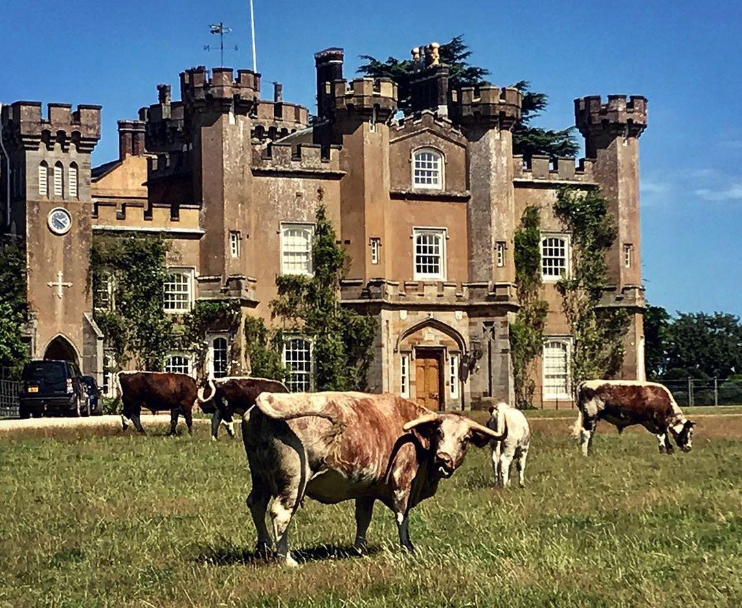 Castillo Knepp Inglaterra
