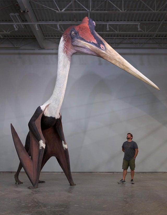 pájaro prehistórico gigante