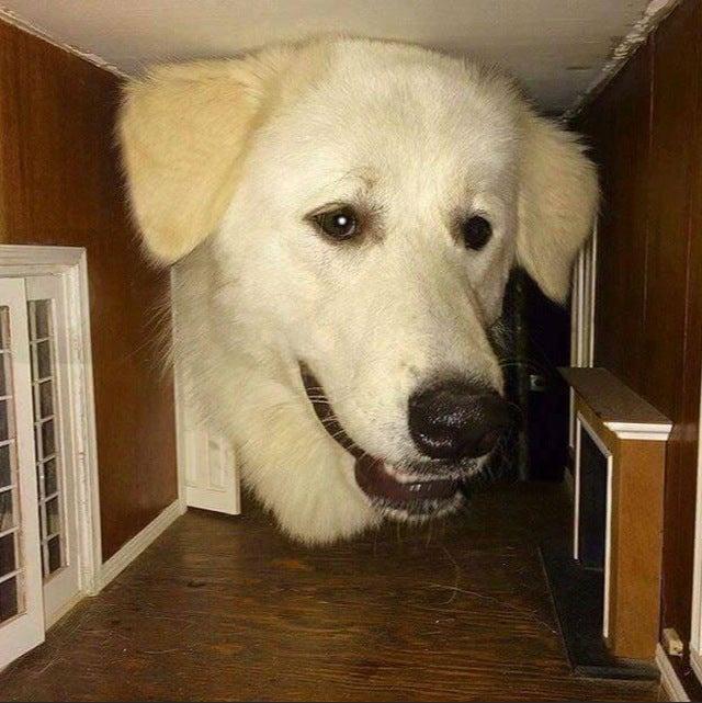 perro cabeza casa muñecas