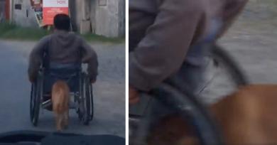 perro-empuja-silla-ruedas