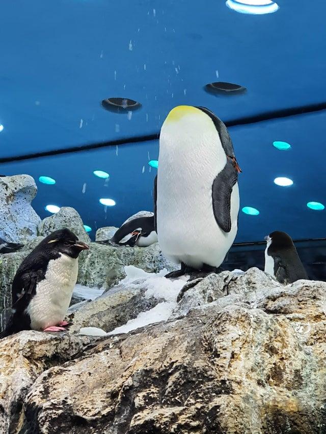 pingüino sin cabeza