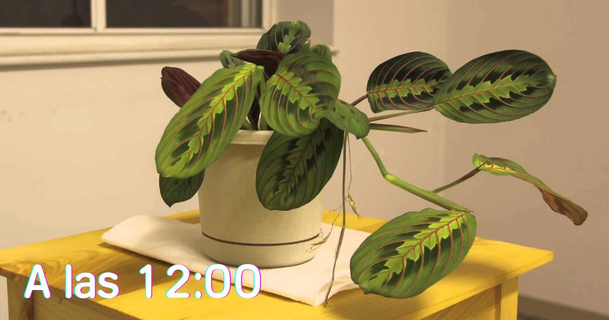 plantas-movimiento