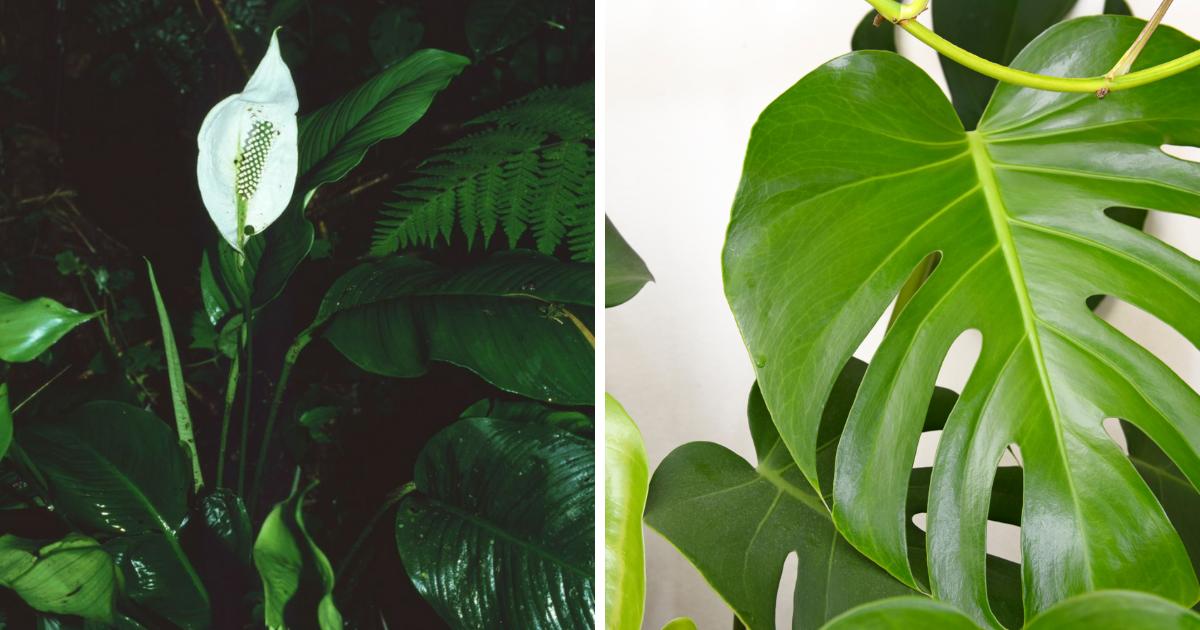 plantas toxicas