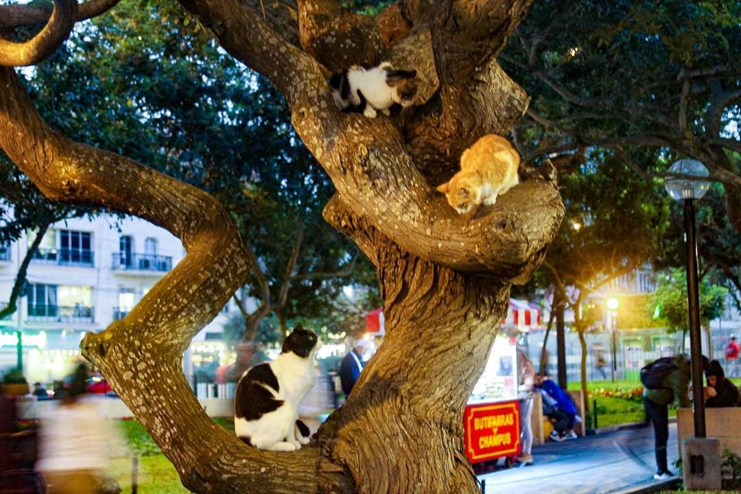tres gatos en arbol