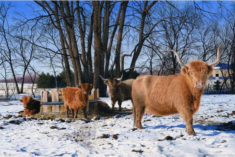 vacas nieve