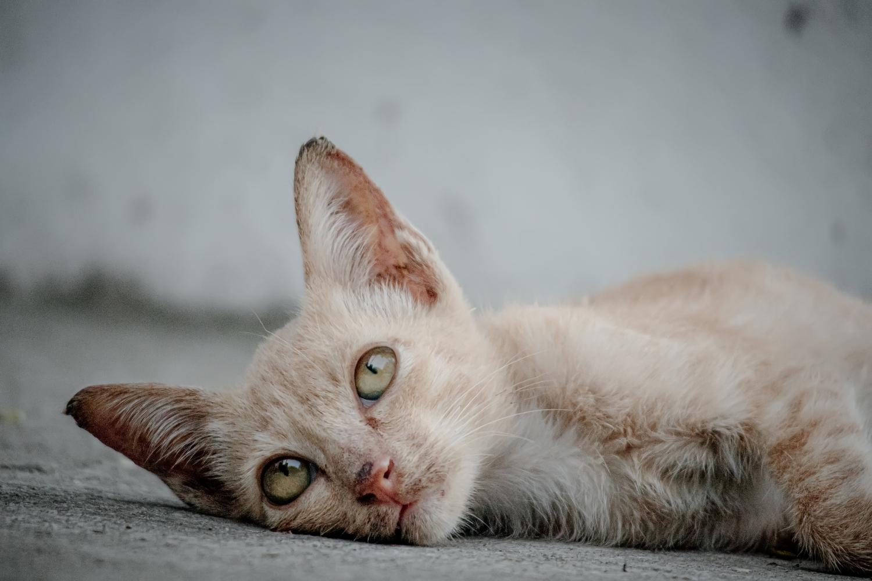 gato aburrido