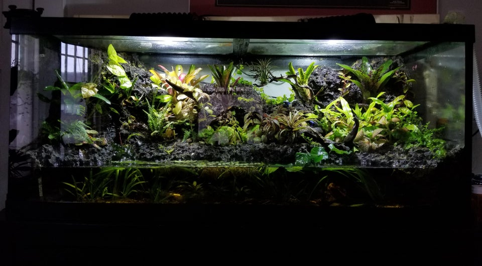 paludario acuario