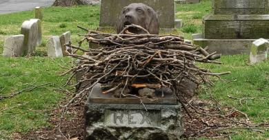 perro-palos