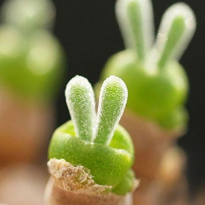 planta hojas