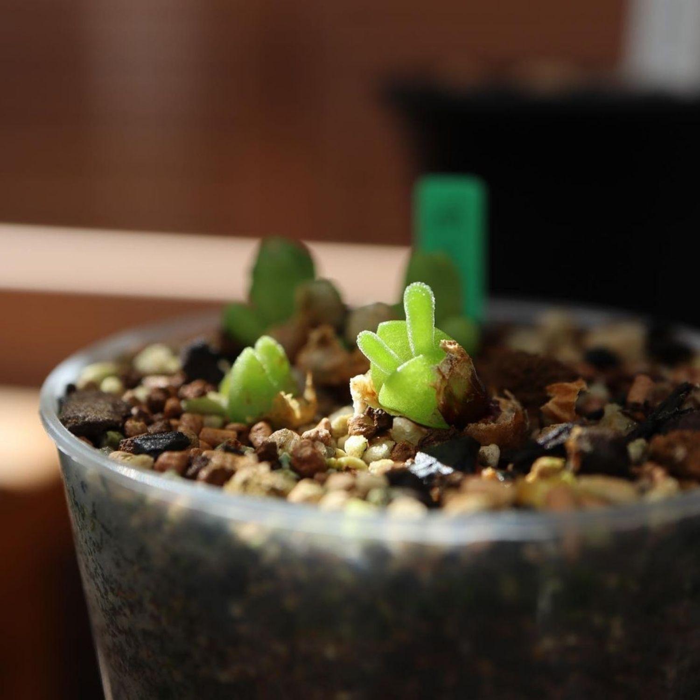 planta pequeña