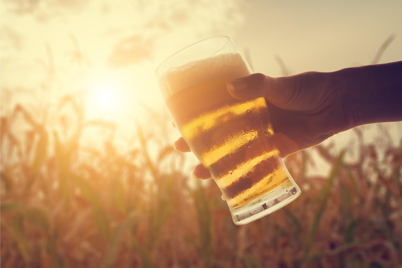 cerveza en el campo