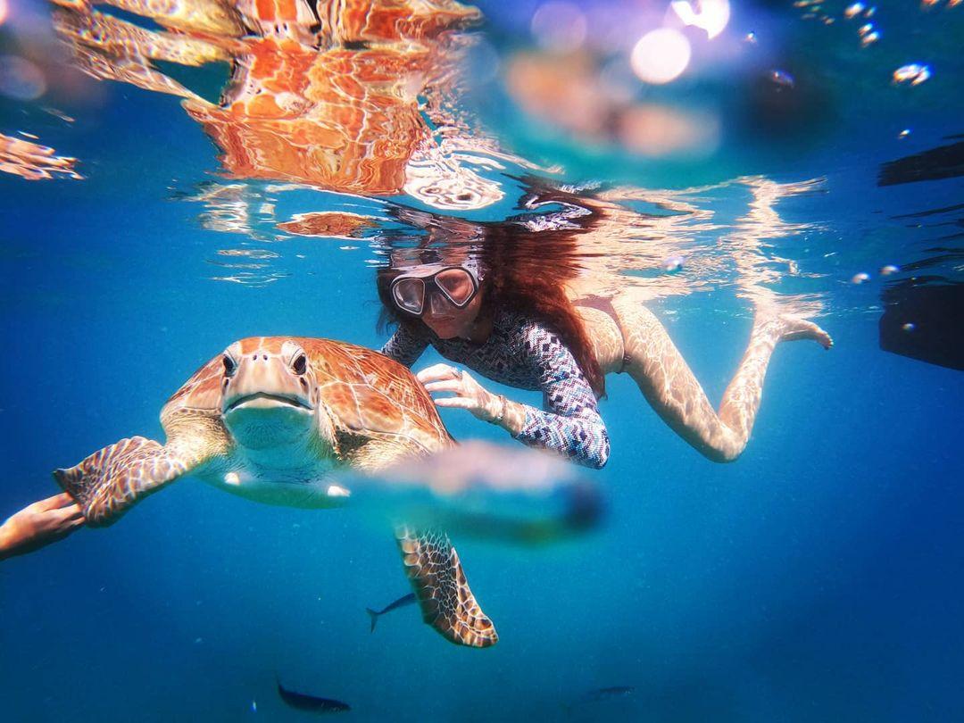 tortuga marina en barbados