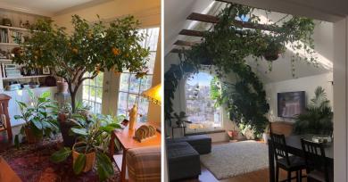 amantes-plantas